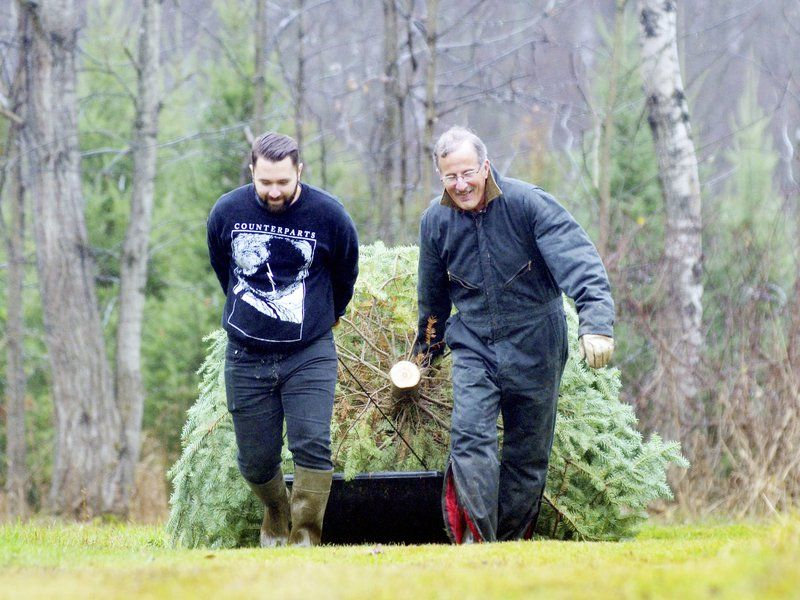 Ashtabula County's Christmas Trees Are Tradition For Many