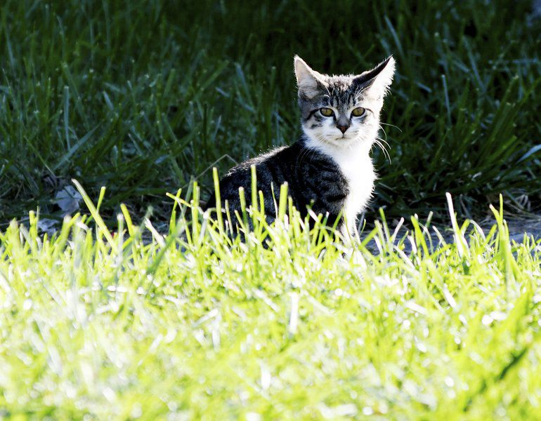 Proposalto ban feeding feral cats causes fur to fly