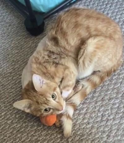 Cat shot with arrow expected to make full recovery