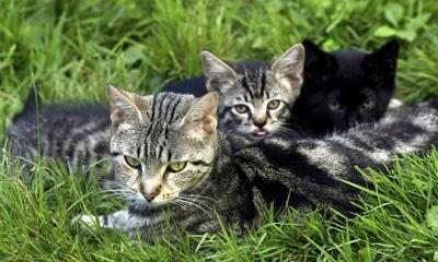 Community Cats Coalition wrapping up purr-fect season
