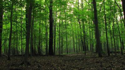 County Metroparks acquires new 129-acre preserve