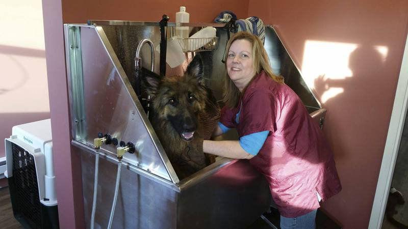 dog trainer opens perfect andover studio local news