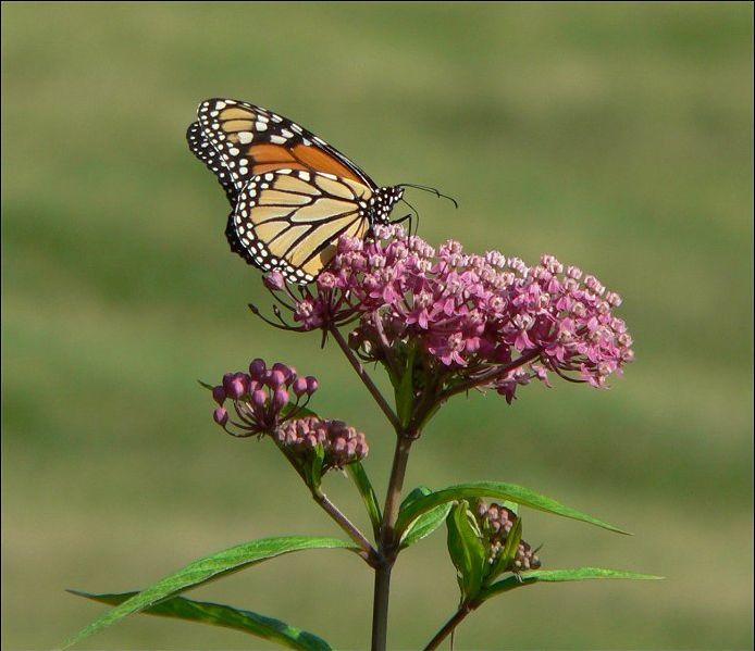 In Praise of Pollinators