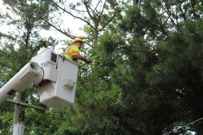 Easton Utilities outlines vegetation management program