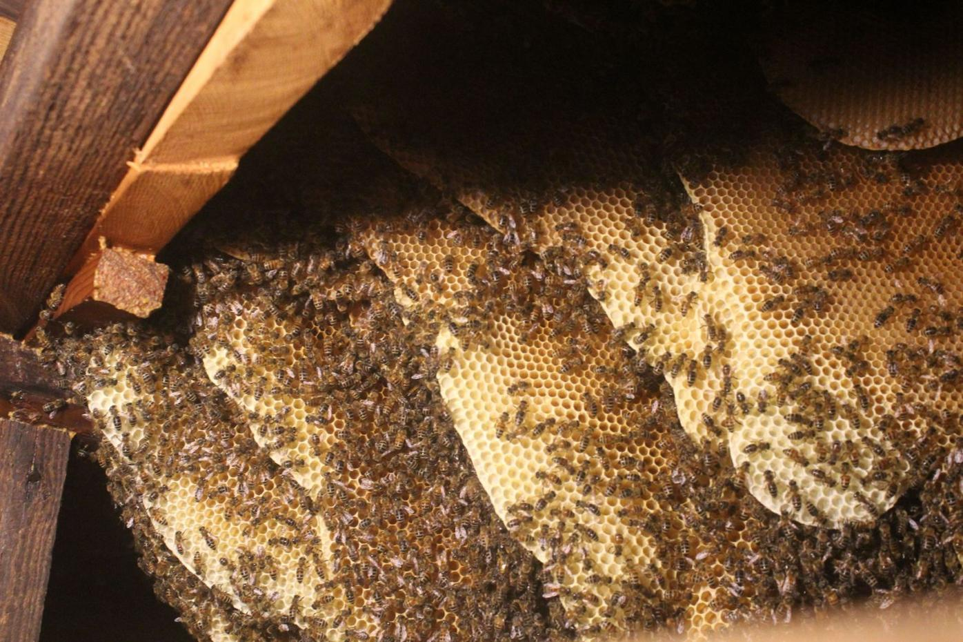 Close up of hive
