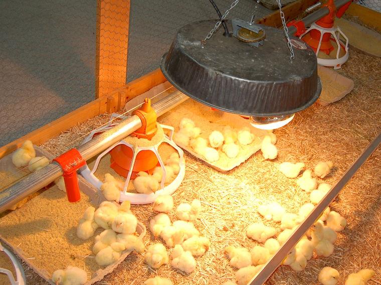 Delmarva Poultry Industry