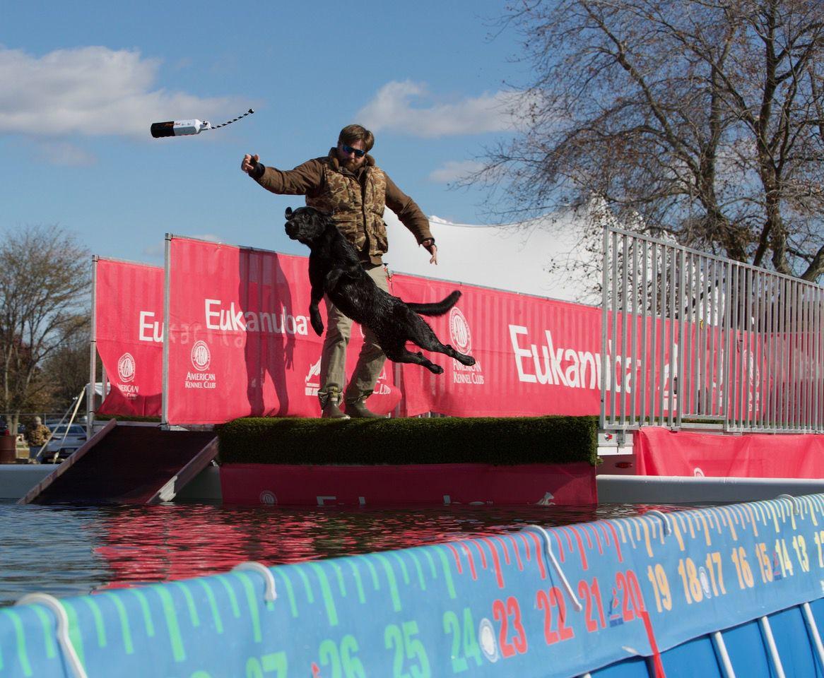 Diving Dogs make big splashes