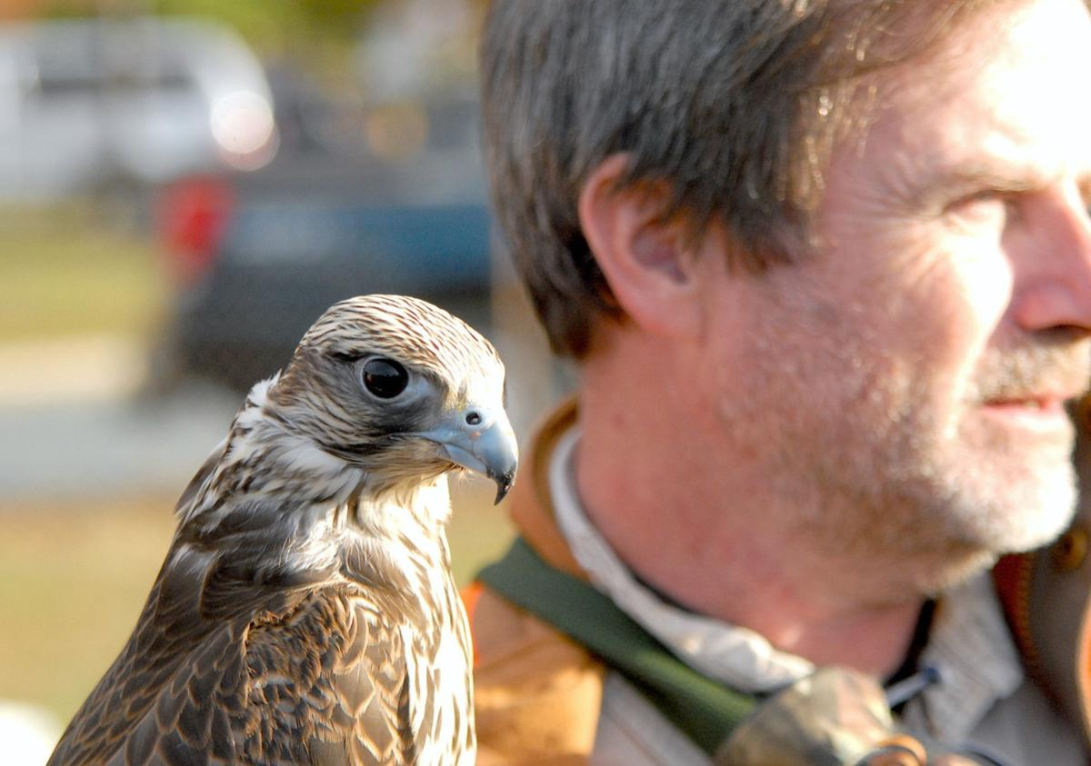 Raptors perform at the Waterfowl Festival