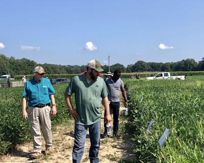 Soybean Checkoff Research Field Day