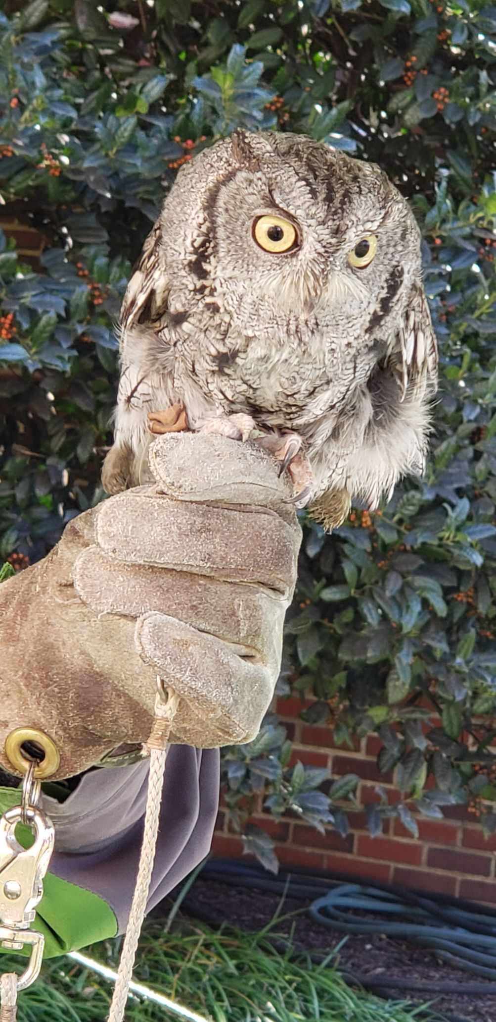 Easton Owl