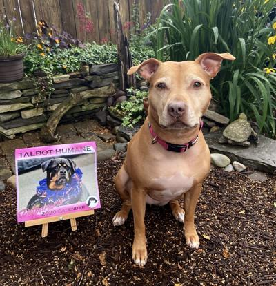 Talbot Humane's 2nd Annual Petparazzi Calendar Contest now open