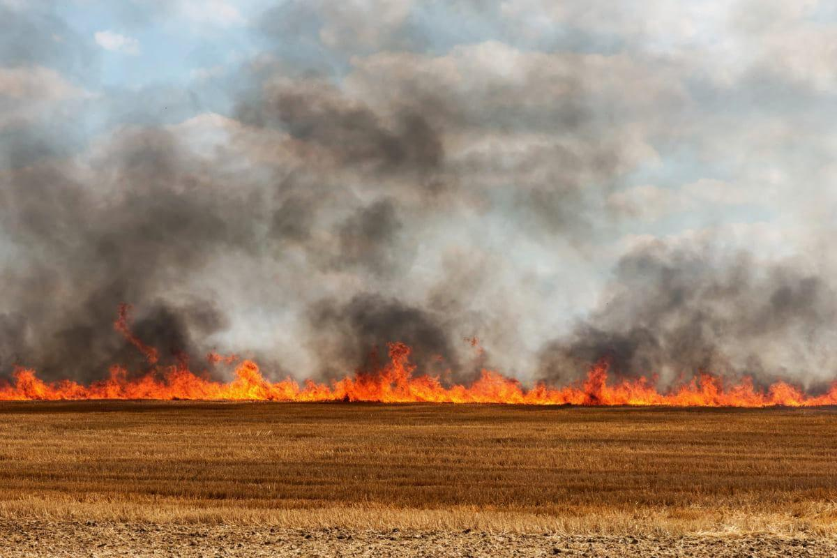 Mid-Shore counties participate in burn ban