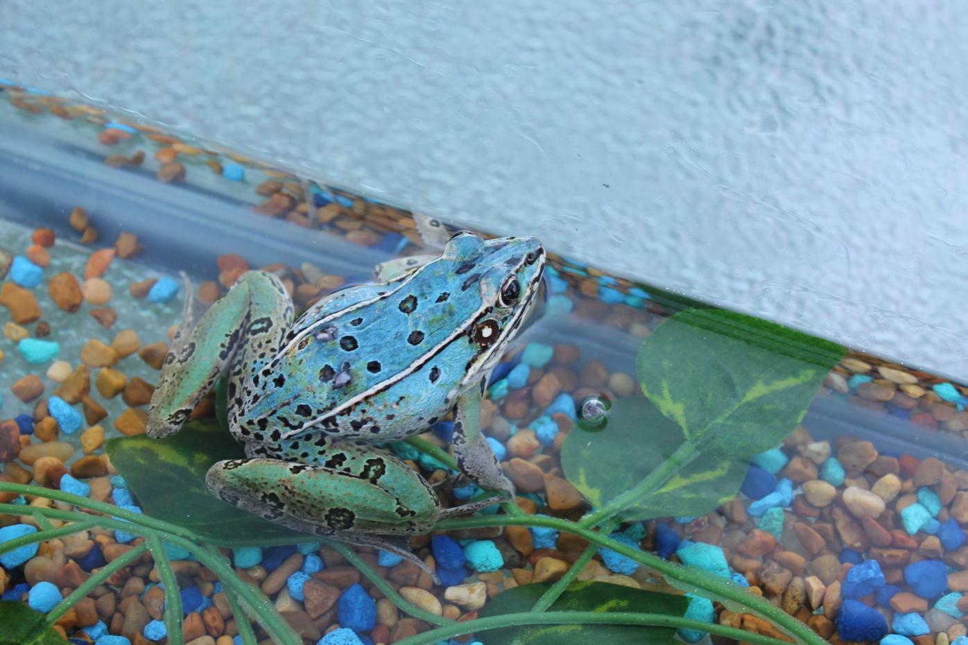 Rare frog find reveals strange coincidence
