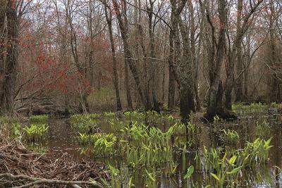 Marshyhope Creek