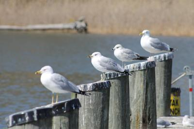 Seagulls keep watch