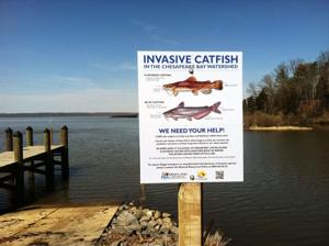 Shore fishermen fight federal catfish regulations
