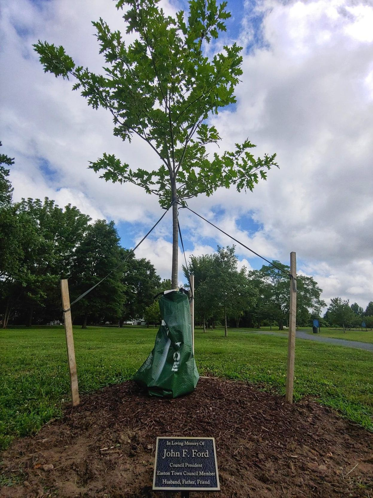 Memorial tree dedicated to Ford