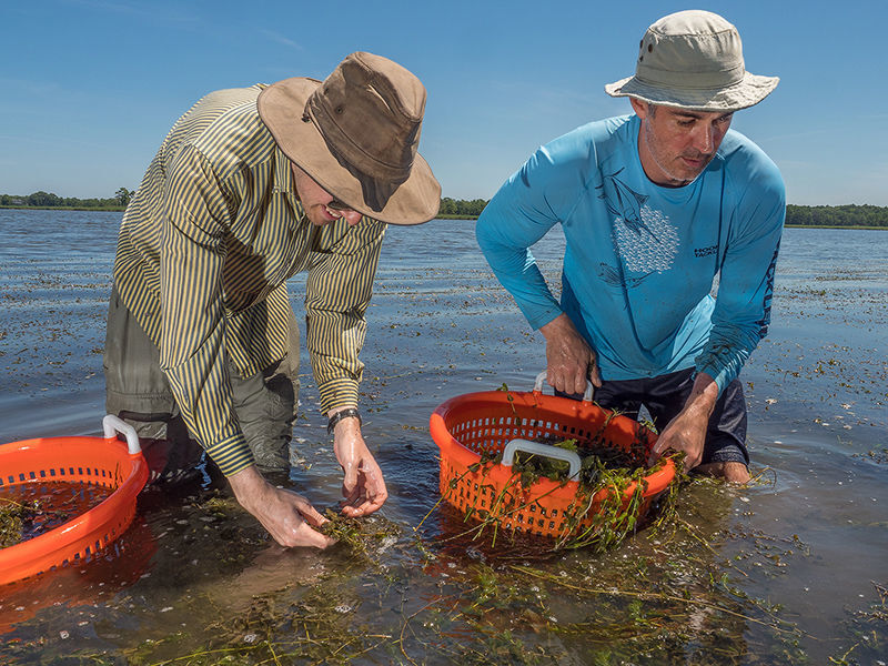 DNR Scientists measure bay grasses