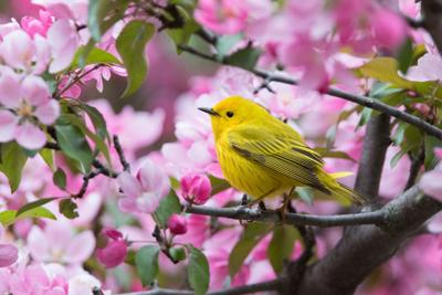 How you can help protect wild birds in your yard