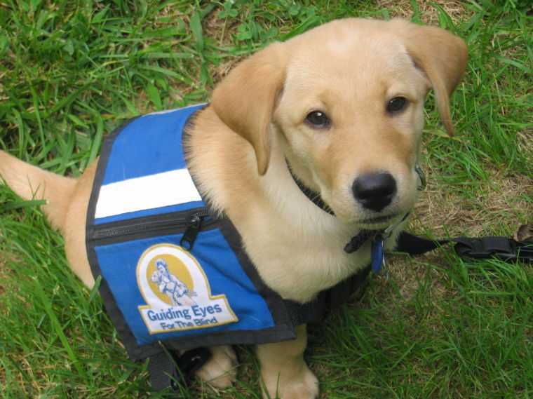 Guiding Eyes Delmarva Region To Hold Orientation For New