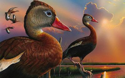Federal duck stamp winner