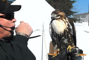 Raptors behave at the Waterfowl Festival