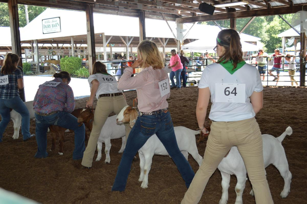 Freeman, Breeding take 1st and 2nd place in Goat Show at Talbot County Fair