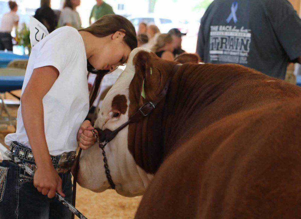 Livestock sale tops off county fair fun