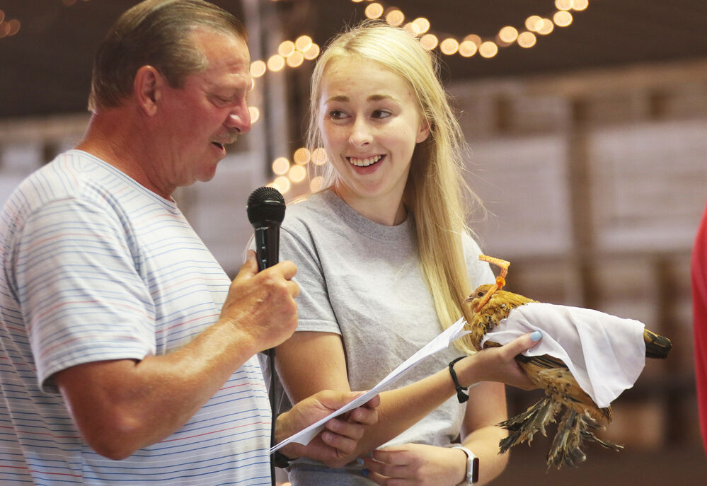 Chickens compete in costume contest at the Scotts Bluff County Fair