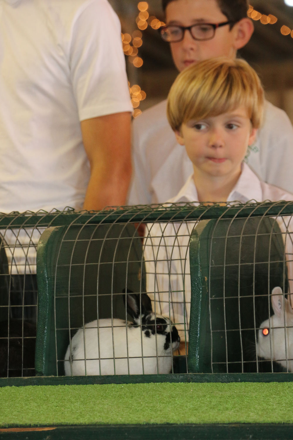 Family takes to rabbits to participate at fair