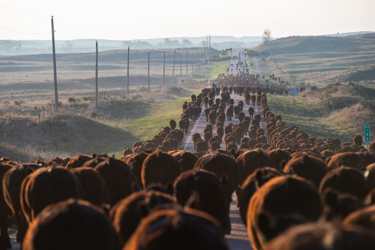 1 - Beef