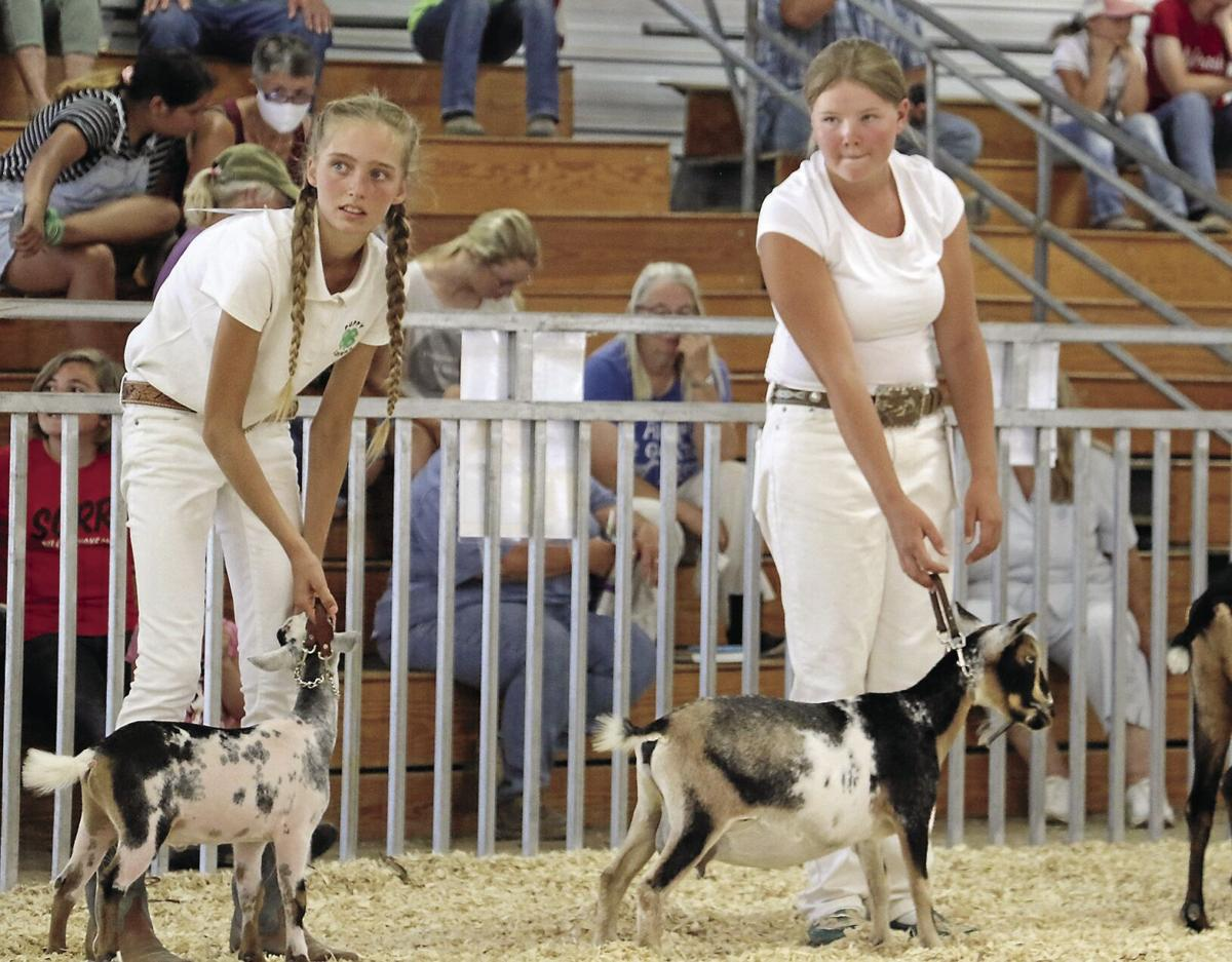 PHOTOS: Scotts Bluff County Fair Dairy Goats 2020