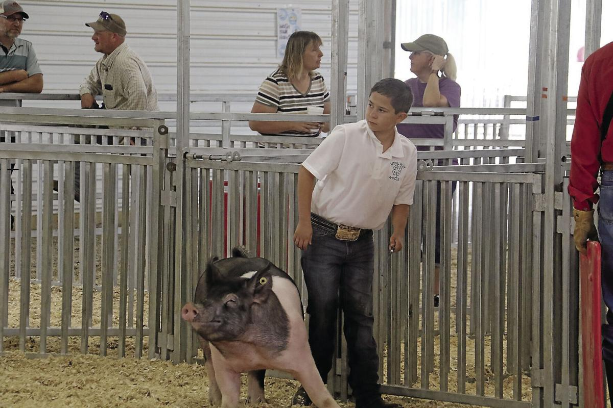 PHOTOS: Scotts Bluff County Fair Market Hog 2020