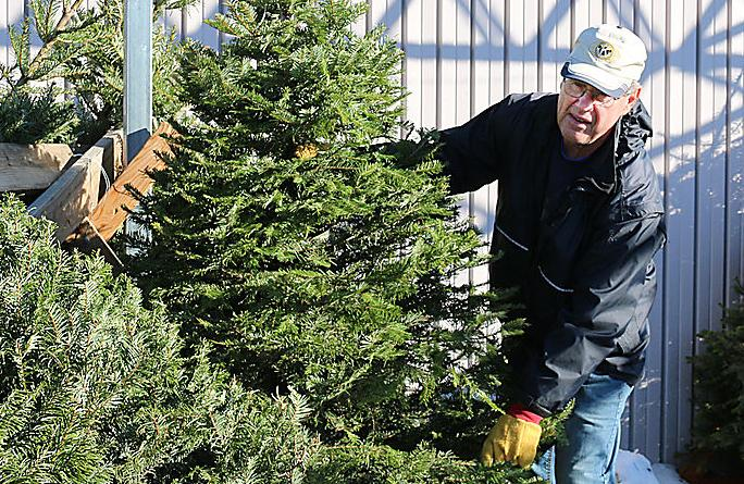 Kiwanis continues Christmas Tree Sale tradition