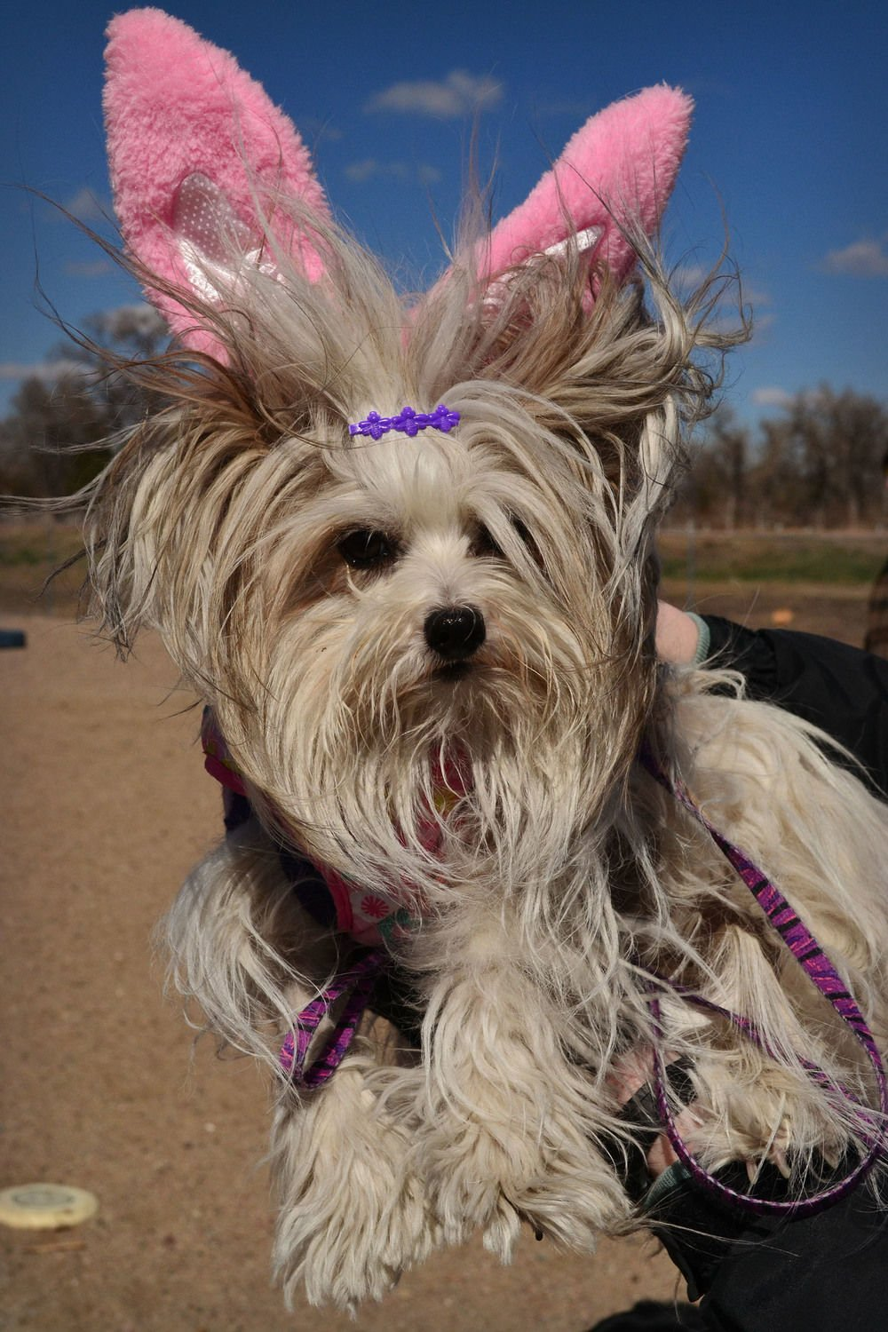 Dog Park Committee hosting Doggy Easter Egg Hunt set for April 15