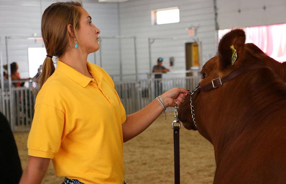 Hard work goes into successful showmanship