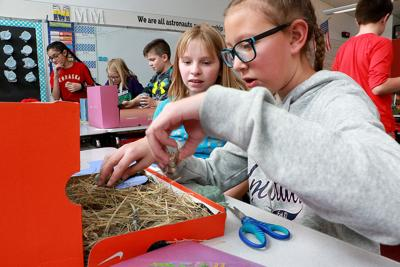 Gering fifth-graders build ecosystems diorama | Local News