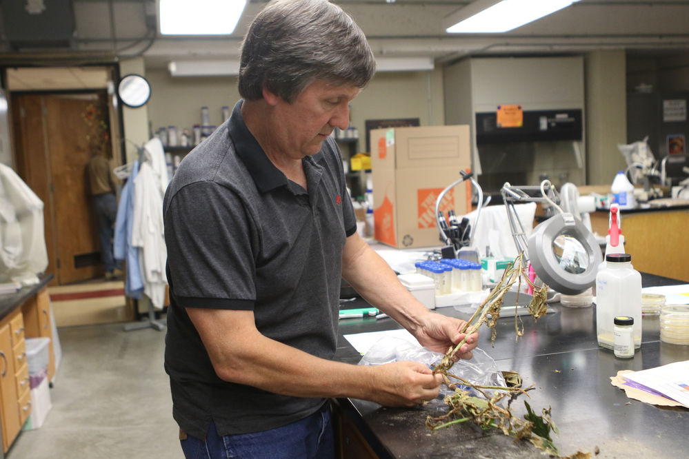 Harveson earning recognition for work, helping producers