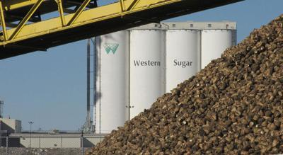 Western Sugar campaign wrapping up this week