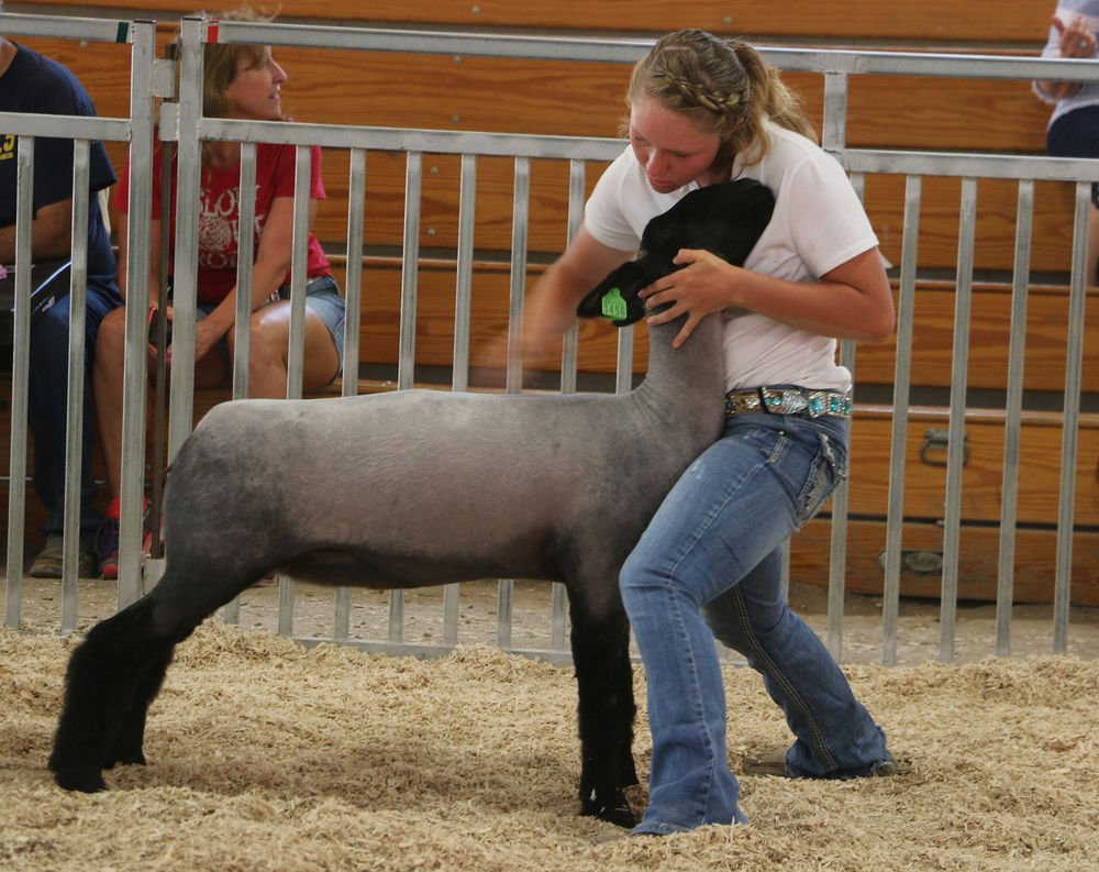 Extension educator sees the other side of 4-H as manager of sheep show