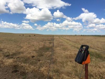 PREC hosting cheatgrass management research field tour