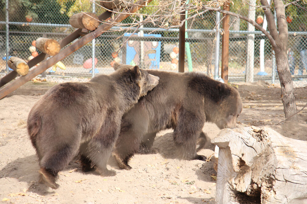 Riverside Discovery Center holds grand opening of bear exhibit