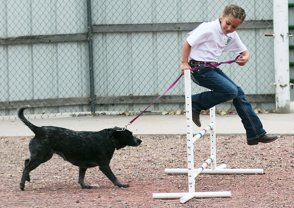 Annual 4-H Dog Show tests handlers skills guiding their pups