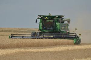 Wheat, field pea harvests wrapping up