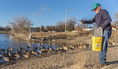 Days of former mayor feeding geese at Terry's lake could come to an end as Terrytown considers wildlife feeding ban