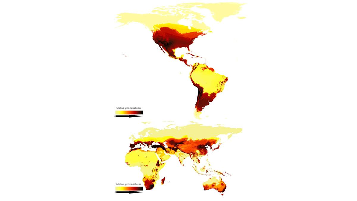 The bee population is dying. Researchers have created first global map of the species to save them.