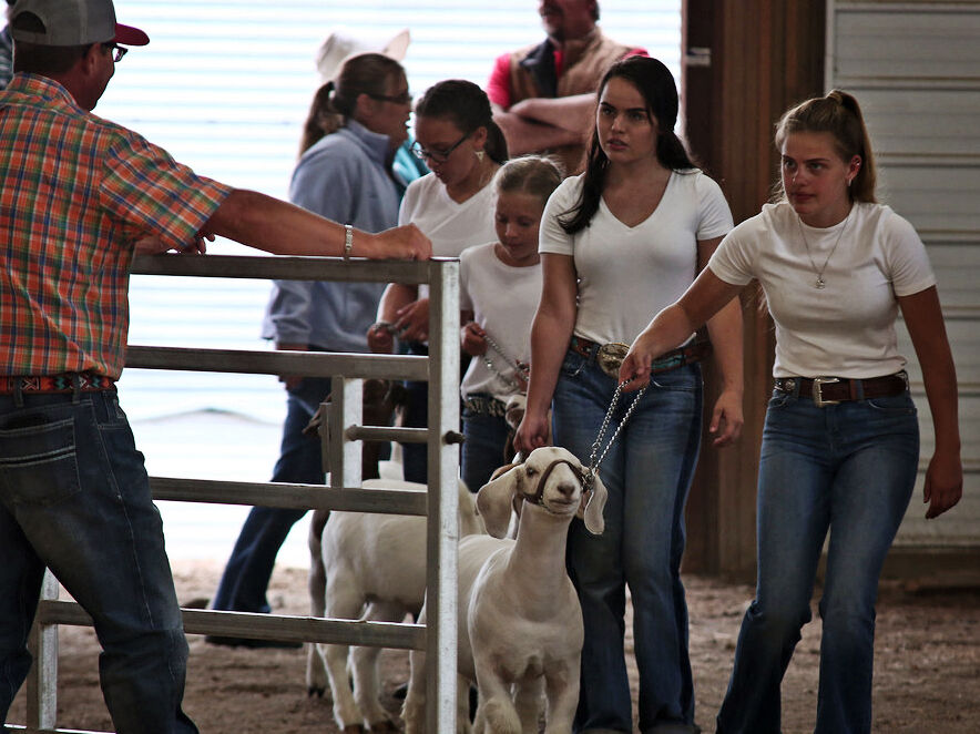 Pinney family shares animal, goat showmanship with fourth generation