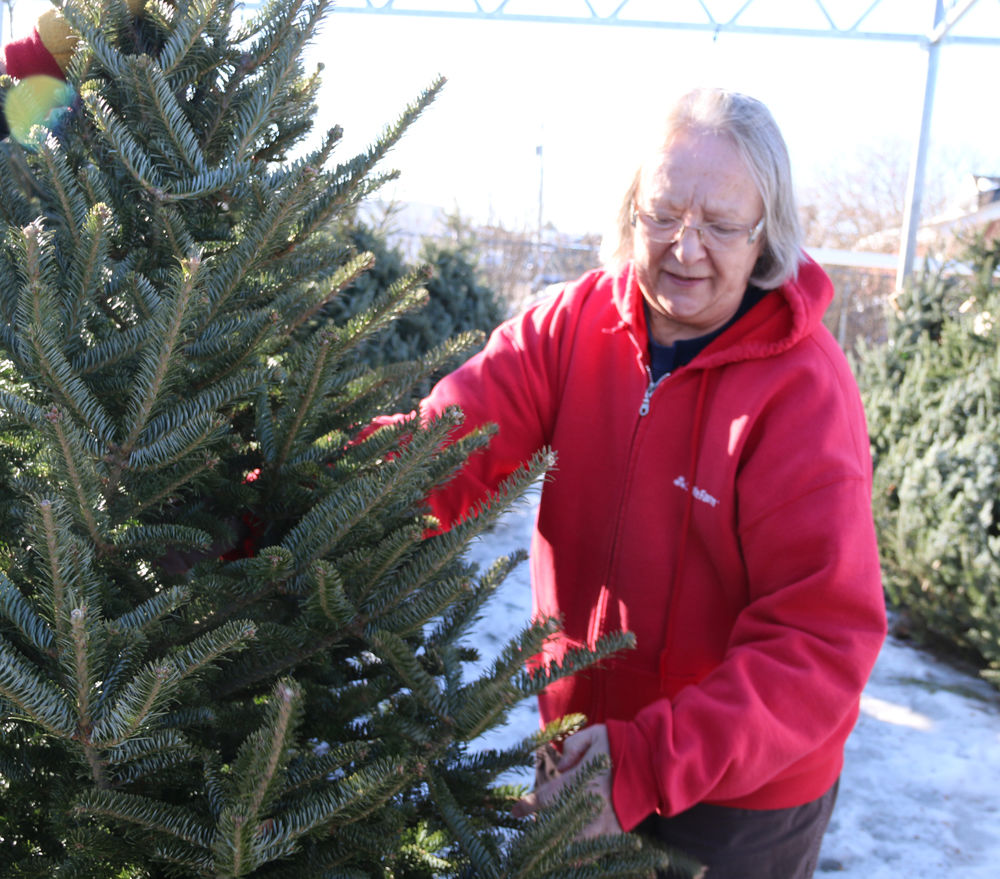 Local Christmas Trees: Kiwanis Continues Christmas Tree Sale Tradition