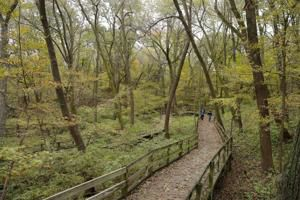 Fontenelle Forest highlighted in Prevention magazine's 'Best Walks in America' list