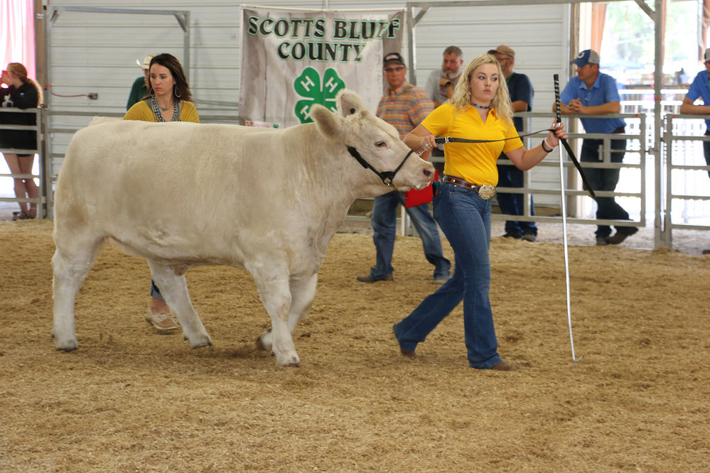 Local senior takes top honor in beef showmanship, onto college to major in ag after graduating
